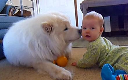 犬と赤ちゃんのオモシロ対面写真