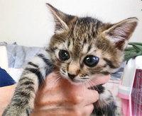 幼猫の里親さんへ