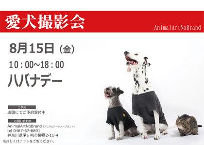 愛犬撮影会 夏編「海中散歩はいかが♪」