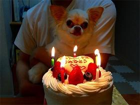 愛犬といっしょに召し上がれる ....Xmasケーキ