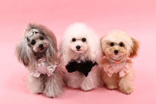 愛犬撮影会 ・・プロが撮ってくれる感動の写真があります♪