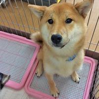 愛犬のハミガキぷち講座のお知らせ