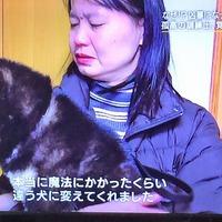 NHK「プロフェッショナル」  仕事の流儀ワンちゃんスペシャル...感想です