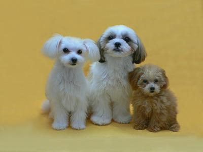 かわいい子犬3匹