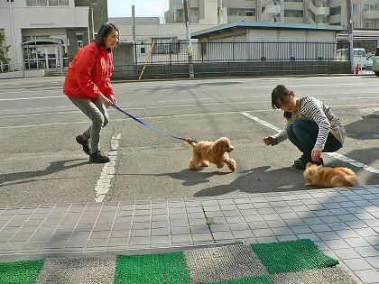 仔犬のはじめてのお散歩ストーリー