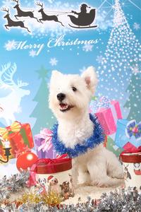 『愛犬撮影会』 いよいよ明日開催です!!