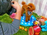 にぎにぎしく、プロカメラマンが撮る愛犬撮影会