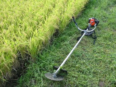 今年の最終草刈り作業始まりました。