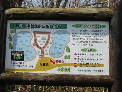 泉ヶ岳の水芭蕉が綺麗ですよ。
