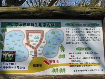 今年も泉が岳に遅い春がやってきました。