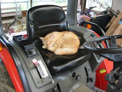 トラクター、ネコに取られたよ。