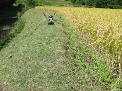 今年も最後の草刈り、もうすぐ終わりです。