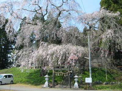 今年は小角の『貴布禰神社』で桜を楽しみました。