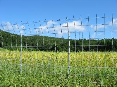 半分完成をしたイノシシ防護柵とは・・・・・。