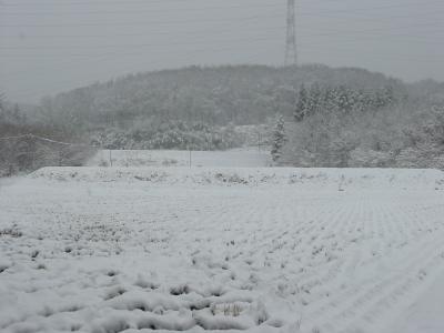 今日は雪になりました。