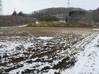 今日は3月11日、雪になりました。