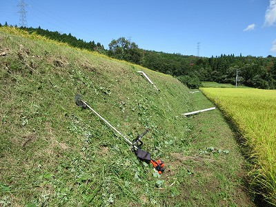 今年も最後の草刈りがんばっています。