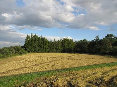 我が家でも稲刈りをしました。