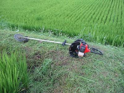 今年も草刈りがんばっています。