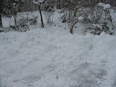 とうとう雪になりました。