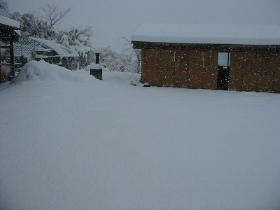 大雪降りました。