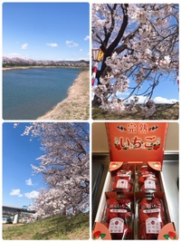 一目千本桜  と   苺