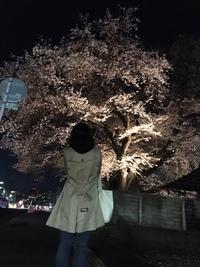 今年最後の桜。