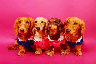 プロカメラマンによる、、『愛犬撮影会』 in ハバナデー