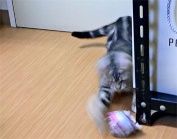 ネコの、紙ボール・サッカー