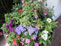 フリー素材 お花たち