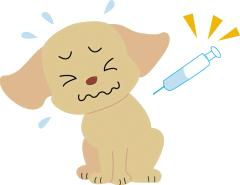 花粉症に新ワザ、、わたし達と愛犬にも