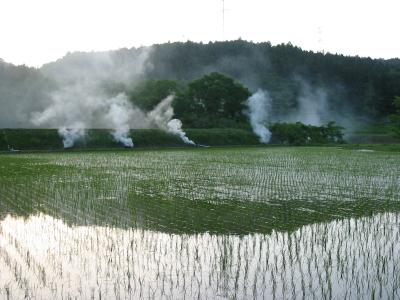 乾いた草を燃やしました。