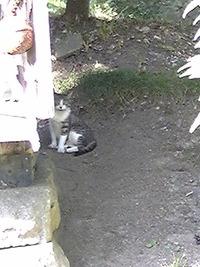 猫ストーカーごっこ