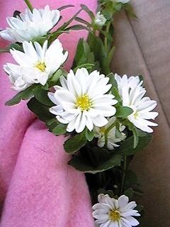 エスへの花