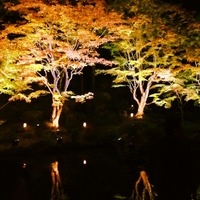 円通院 紅葉ライトアップ 2013