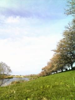 大河原の一目千本桜