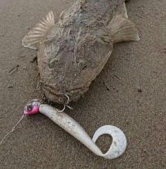 「きびしい釣り…」