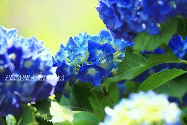 PLEASE☆明日6/26(日)も営業致します♪ 6/27(月)定休日★プリーズ☆加川