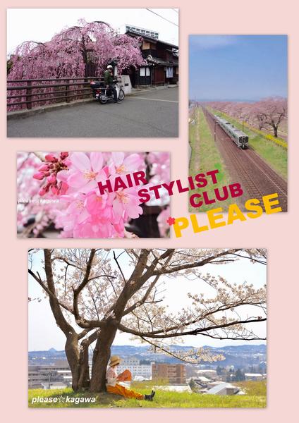 PLEASE☆桜♪春を探しに♪2 【4/15(日)4/16(月)定休日(※連休)】プリーズ☆加川