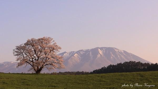 PLEASE☆岩手山と一本桜★光ペ写真展★プリーズ☆加川