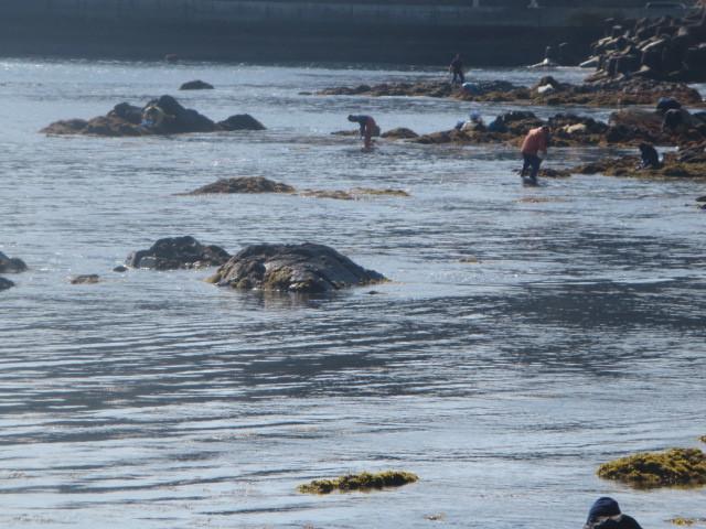 海藻の開口