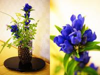 ★花に寄せて(8月)【日本の宿 古窯】