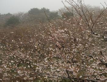 雨だって 関係ない(^_^)v