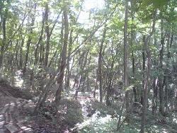今日も森の中~♪