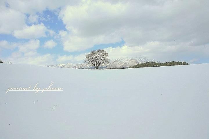 雫石 一本桜☆岩手山  2009冬 プリーズ☆加川 せんだい