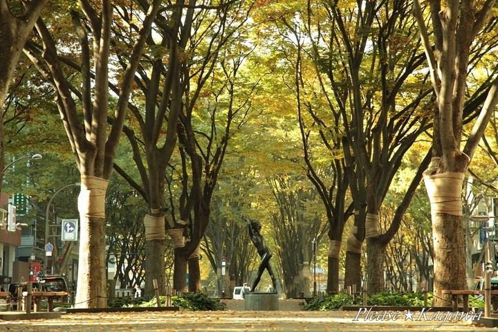 仙台・定禅寺通り☆2011光のページェント☆プリーズ☆加川
