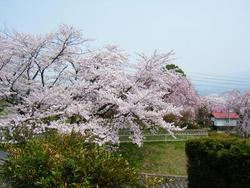 春色の山形☆上山城下町
