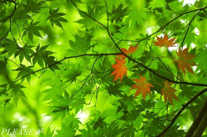小さな秋☆美っけ!  秋はすぐそこです! プリーズ☆加川