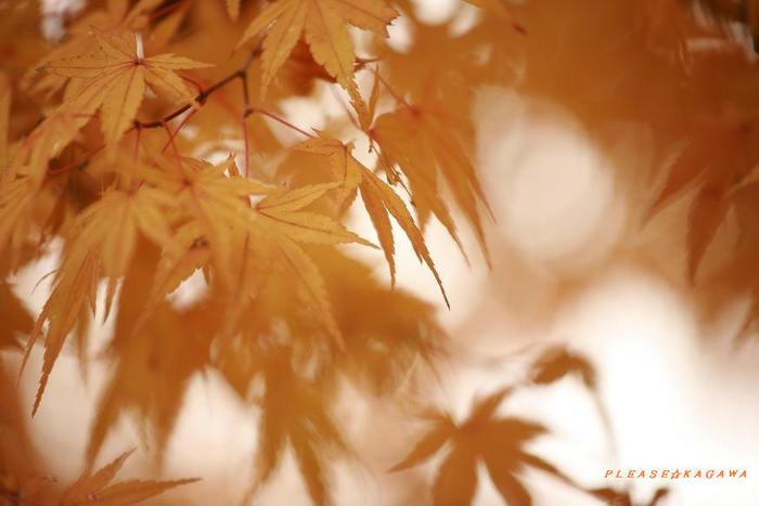 日本の美  東北の紅葉       仙台☆プリーズ