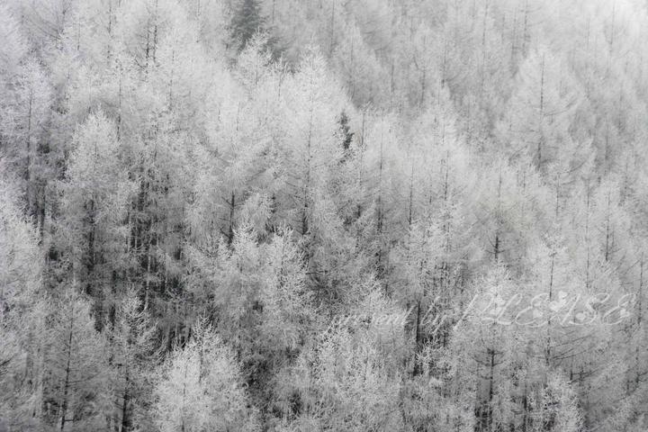 樹と雪と白と黒☆ SENDAI Beauty PLEASE